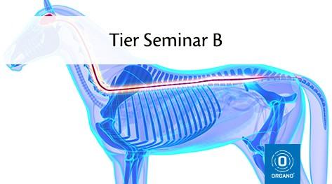 TierOrganetik Seminar B